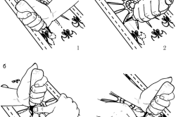 Положение рук резчика и инструмента при контурной резьбе